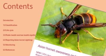 CIEH: Asian hornet awareness & identification
