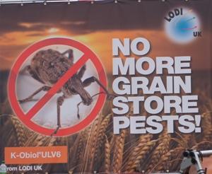 No grain pests