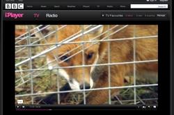 Countryfile fox