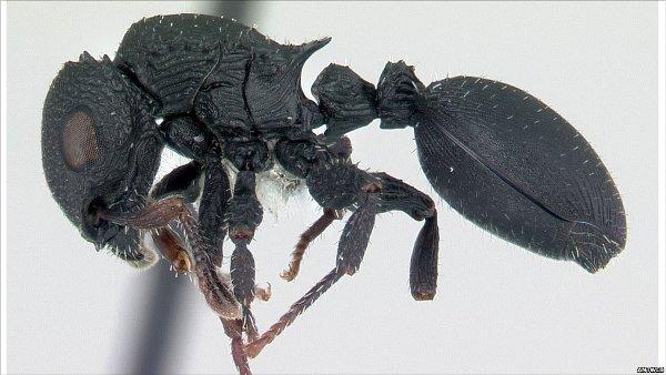 Digital ant