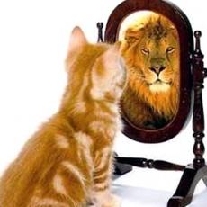 Survey kitten & lion