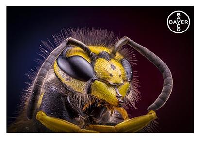 Bayer Wasp 1