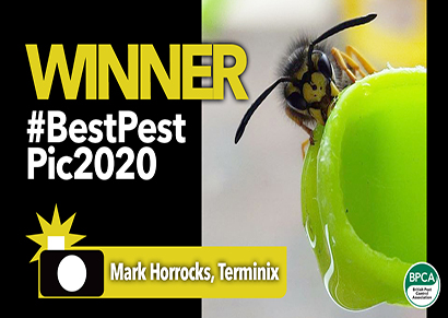 Best Pest Pic 2020 winner