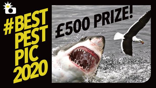 Bestpestpic2020 Banner Shark