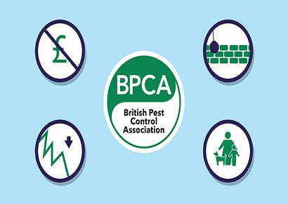BPCA graphic