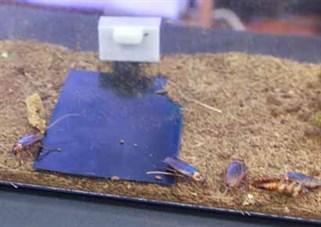 Digital Brandenberg Roaches