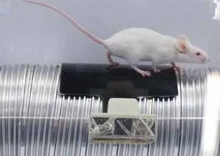 Digital Brandenerg Mice