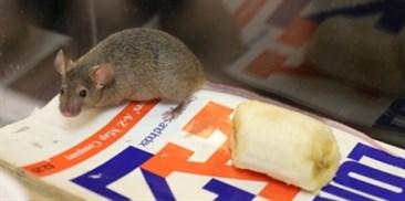 Pesttech Pelgar Mouse