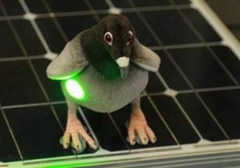 Ppc Live Laser Pigeon