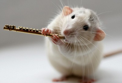 Rat - musical