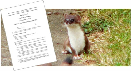 Stoat and spring traps notification