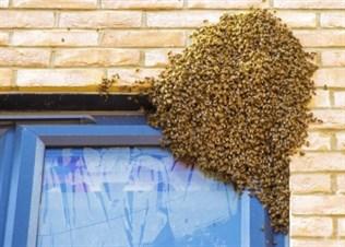 Woodham Ferrers Bees