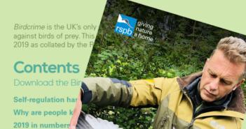 RSPB Birdcrime Report 2019