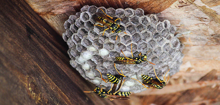 Global insect pest control market to be worth £11.4 billion by 2026